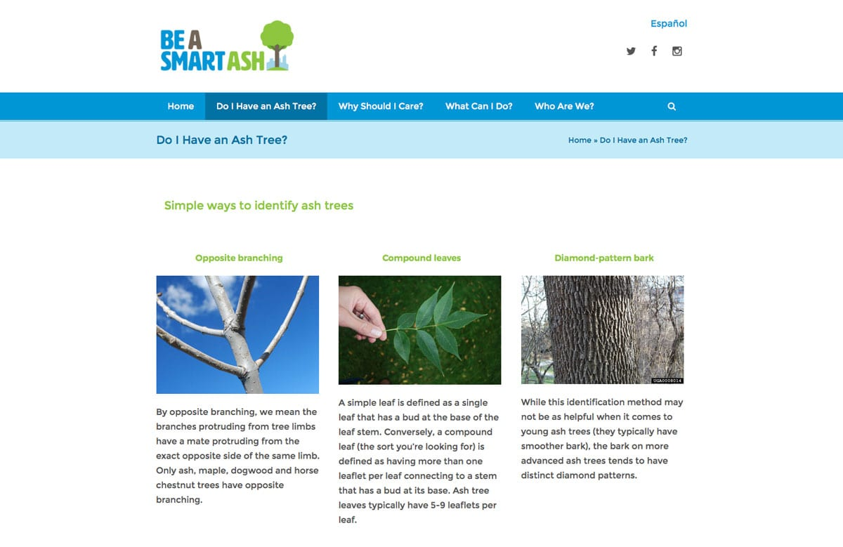 Denver-parks-emerald-ash-borer-website-design-1