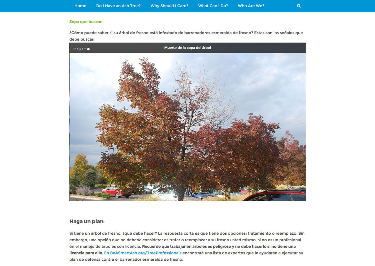 Denver-parks-emerald-ash-borer-website-design-2