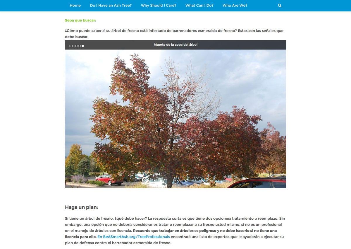 Denver-parks-emerald-ash-borer-website-design-2